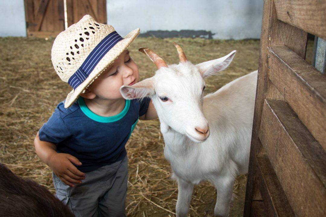Bundoora Farm Melbourne
