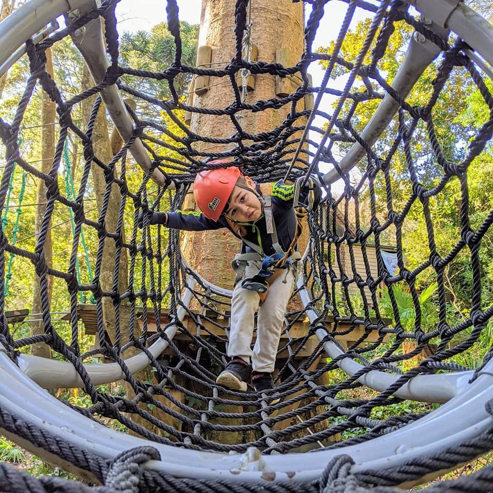 tree climbing discount