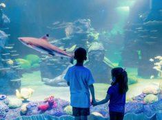 Sea Life Sydney discount