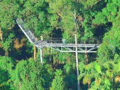 Tamborine Mountain Rainforest Skywalk