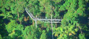 Tamborine Mountain Rainforest Skywalk