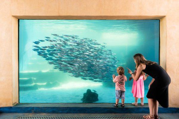 aquarium of WA discount