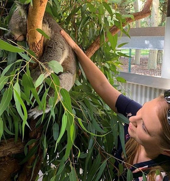 The Maze Koala Experience