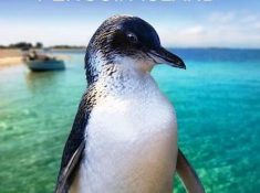Rockingham Wild Encounters - Penguin Island