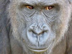 Taronga Zoo discount