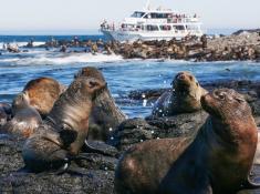 seal tour phillip island