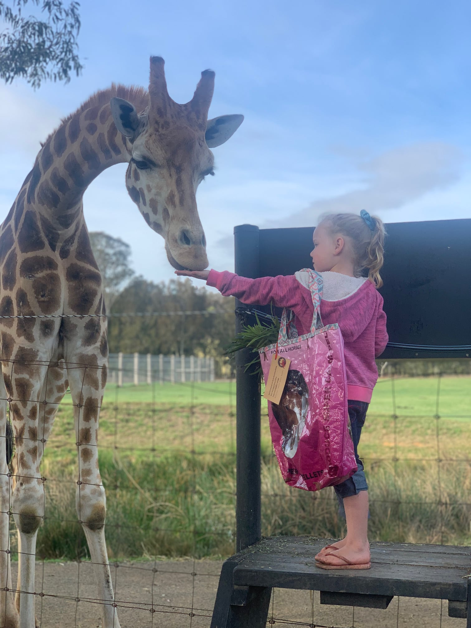Mogo Wildlife Park discount