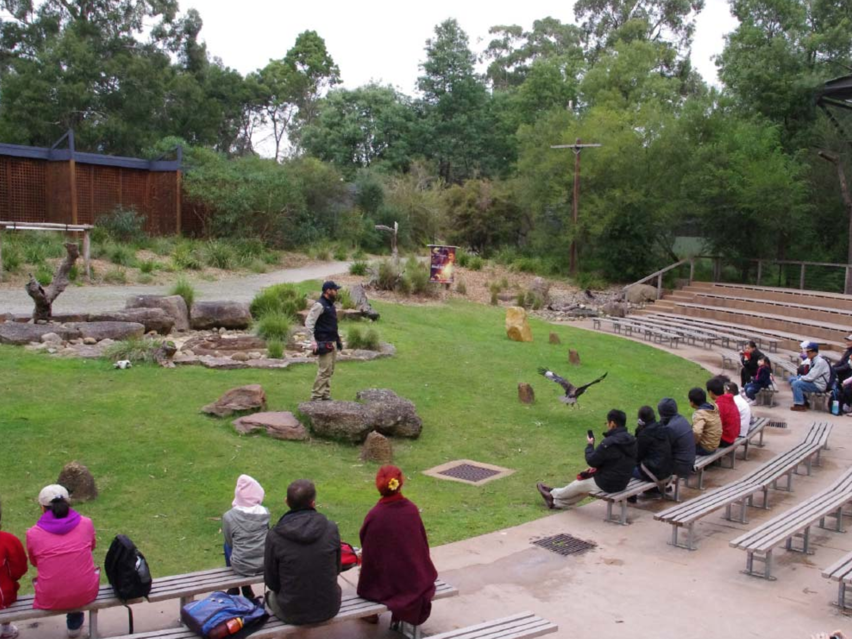 Healesville sanctuary discount