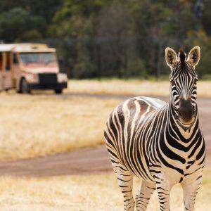Werribee zoo discount